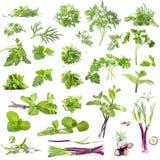 Uma grande coleção de ervas e de especiarias frescas Imagem de Stock