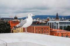 Uma grande gaivota branca em um fundo que anda ao longo de um parapeito contra um fundo de árvores verdes e de uma cidade imagem de stock