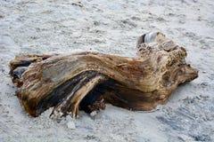 Uma grande parte de madeira lançada à costa, resistida e envelhecida na água do mar, tomada pela maré ao branco envia em uma prai imagem de stock