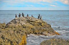 Uma grande rocha com um rebanho dos pássaros no fundo do mar em Crimeia Fotografia de Stock