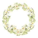 Uma grinalda de flores do jasmim Ilustração da aguarela Imagens de Stock