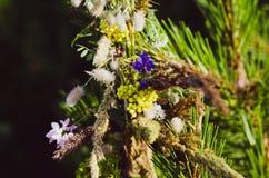 Uma grinalda de flores selvagens e de ervas é esquecida em um ramo do pinho Preparação para o feriado eslavo de Ivan Kupala fotografia de stock