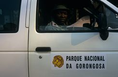 Uma guarda florestal do parque nacional de Gorongosa, Mozambique Imagem de Stock