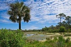 Uma ideia de ângulo larga de uma área pantanoso cercada por árvores em Wakulla salta Florida imagem de stock