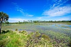 Uma ideia de ângulo larga de uma área pantanoso cercada por árvores em Wakulla salta Florida fotografia de stock