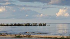 Uma ideia de cargos velhos do quebra-mar na praia, Lapmezciems, baía de Riga, imagens de stock royalty free