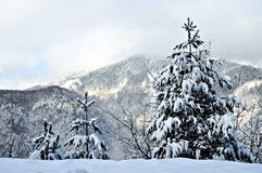 Uma ideia maravilhosa do inverno bonito na montanha Kopaonik foto de stock