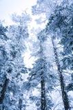 Uma ideia nevado do muntain xiling da neve imagens de stock