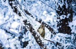 Uma ideia nevado do muntain xiling da neve fotografia de stock royalty free