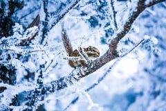 Uma ideia nevado do muntain xiling da neve imagem de stock