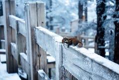Uma ideia nevado do muntain xiling da neve imagem de stock royalty free