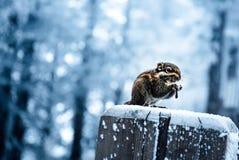 Uma ideia nevado do muntain xiling da neve fotos de stock royalty free