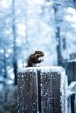 Uma ideia nevado do muntain xiling da neve foto de stock