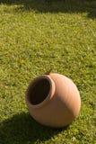 Uma iguana pequena Foto de Stock
