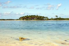 Uma ilha de Maldivas fotografia de stock royalty free