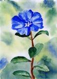 Uma ilustração azul da flor da aguarela Ilustração Stock