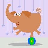 Equilíbrio do elefante Fotografia de Stock Royalty Free