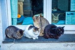 Uma ilustração de um condomínio/teatro do gato com dos quatro gatinhos incluir diferente dos brinquedos e: Siamese, angora e gato imagem de stock royalty free