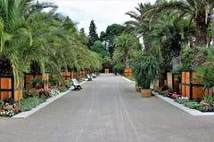 Uma imagem de uma palmeira, jardim da palma foto de stock