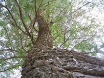 Uma imagem quadrada interessante de uma árvore de salgueiro alongada Imagem de Stock