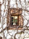 Uma janela em uma videira cobriu a parede, castelo de Rittersdorf, Alemanha, detalhe arquitetónico Fotografia de Stock