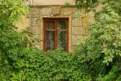 Uma janela velha na parede da construção coberto de vegetação com os verdes e os ramos Imagens de Stock