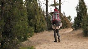 Uma jovem mulher atrativa em um chapéu vermelho anda através da floresta na mola adiantada com uma grande trouxa do turista vídeos de arquivo