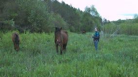 Uma jovem mulher com um dente-de-leão em suas mãos está estando perto do cavalo Menina e cavalo no campo filme