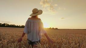 Uma jovem mulher em um chapéu anda o campo de trigo, toca no spikelet No por do sol, vista traseira tiro do steadicam filme
