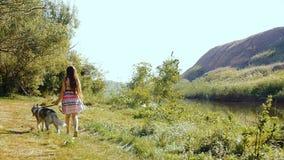 Uma jovem mulher está andando com um cão de puxar trenós na floresta vídeos de arquivo