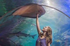 Uma jovem mulher toca em um peixe da arraia-lixa em um túnel do oceanarium fotos de stock royalty free