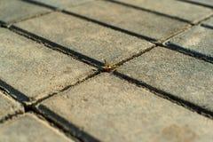 Uma l?mina de rupturas da grama atrav?s dos pavimentos fotos de stock royalty free