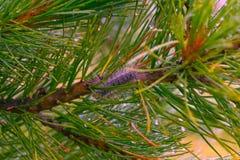 Uma lagarta peludo preta bonita rasteja ao longo de um ramo com g foto de stock