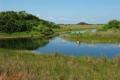 Uma lagoa Imagem de Stock
