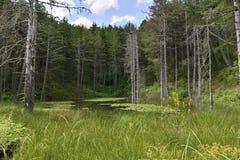 Uma lagoa com lírios de água em Forest Clearing imagem de stock