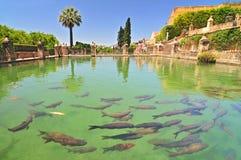 Uma lagoa de peixes no Alcazar de los Reyes Cristianos, Córdova, Espanha fotografia de stock royalty free