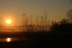 Uma lagoa do ouro Fotografia de Stock