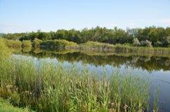 Uma lagoa do verão, a reflexão da floresta na lagoa Foto de Stock Royalty Free