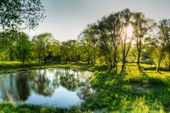 Uma lagoa pequena com árvores e grama verde Fotos de Stock Royalty Free