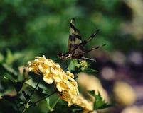 Uma libélula em uma flor foto de stock royalty free