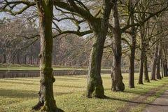 Uma linha de árvores ao longo de uma avenida, de um canal da água e de uma floresta no fundo fotografia de stock