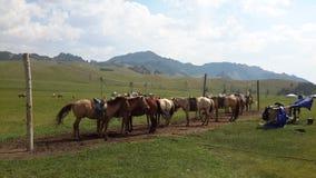 Uma linha de cavalos Imagem de Stock