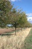 Uma linha misturada de árvores de fruto foto de stock royalty free