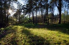 Uma luz do sol na floresta selvagem verde Fotos de Stock Royalty Free