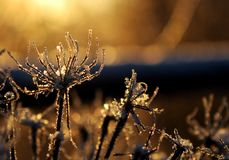 Uma luz solar congelada da planta na primavera fotografia de stock