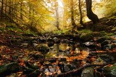 Uma mágica na floresta Foto de Stock