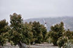Uma máquina de vento em um rancho do abacate, 1 foto de stock