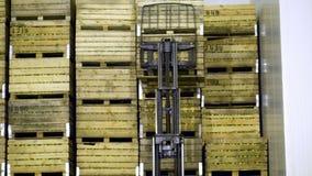 Uma máquina especial, carregador, caminhão de empilhadeira põe grandes caixas de madeira com as maçãs sobre se, em um armazenamen filme