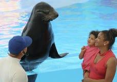 Uma mãe e uma filha fazem um amigo em Delphinario, Sonora, Mexi imagem de stock royalty free