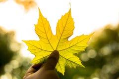 Uma mão que guarda uma folha verde Fotos de Stock Royalty Free